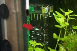 Co2 Bläschen Berechnen : bio co2 anlage f r besseres pflanzenwachstum im aquarium ~ Themetempest.com Abrechnung