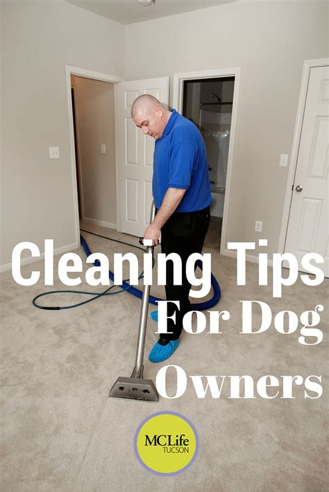 cleaning tips  dog owners mclife tucson