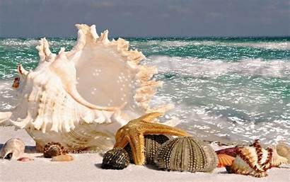 Seashells Seashell Playa Giphy Thank Ocean Buenas