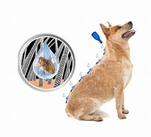 Autositz Für Hunde Bis 15 Kg : duoprotect f r hunde bis 15 kg ~ Frokenaadalensverden.com Haus und Dekorationen