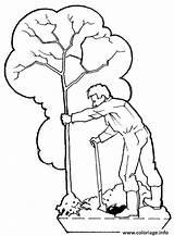 Arbre Plantation Coloriage Dessin Imprimer Gratuit Coloriages sketch template
