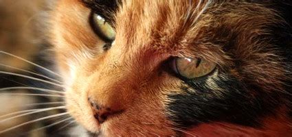 remarkable facts  cat nose freckles catster