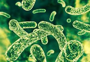 The health of your gut microbiome could predict your risk ...