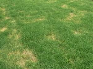 Trockene Stellen Im Rasen : gelbe flecken und trockene stellen im rasen ~ Markanthonyermac.com Haus und Dekorationen