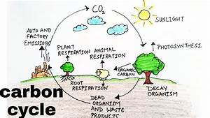 Carbon Cycle  How To Draw Carbon Cycle Diagram  Diagram Of