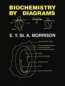 Biochemistry By Diagrams By E  Y  St  A  Morrison