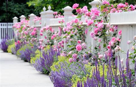plants that grow up fences white fence with beautiful colorful plants pictures photos images