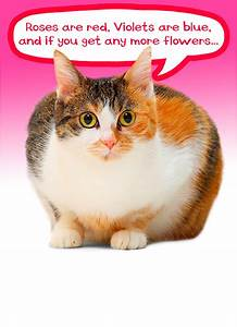 """Funny Valentine's Day Card - """"Cat Roses"""" from CardFool.com"""
