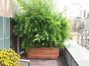 Indoor Grow Anleitung : 26 diy garden privacy ideas that are affordable incredible balcony garden web ~ Eleganceandgraceweddings.com Haus und Dekorationen