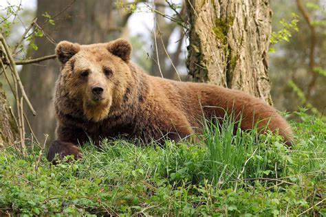 forest animals bears 2500x1667 wallpaper High Quality