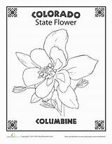 Colorado State Flower Worksheet Coloring Pages Columbine Worksheets Education Lavender Grade Its Every History Adult Choose Own States Petals Pretty sketch template