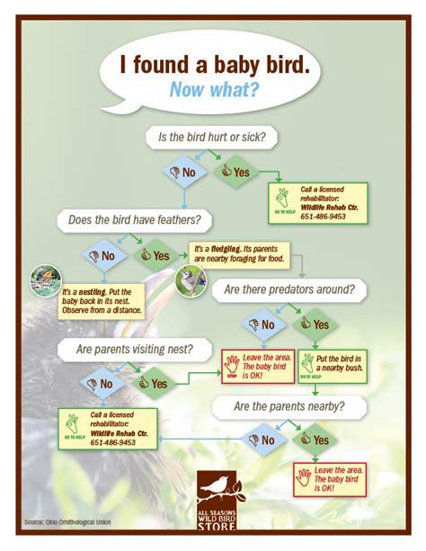 what do you call a baby bird mccnsulting web fc2 com
