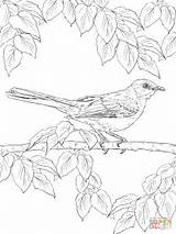 Coloring Realistic Pages Mockingbird Northern Birds Drawing Bird Printable Supercoloring Sheets State Crafts Animals Colouring Mocking Animal Perched Texas Nature sketch template