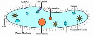 Cell Structure  U0026 Function