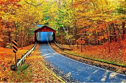 Covered Fall Autumn Foliage Bridge Leaves Road
