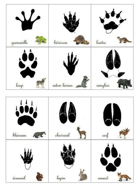 17 meilleures id 233 es 224 propos de empreinte animaux sur animaux d impression 224 la