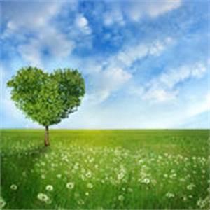 Baum Der Liebe : glauben hoffnung liebes frieden lizenzfreie stockbilder bild 7880389 ~ Eleganceandgraceweddings.com Haus und Dekorationen