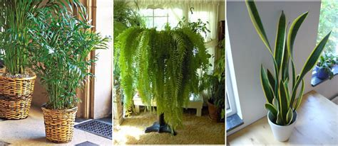 rid  mold successfully   common house plants