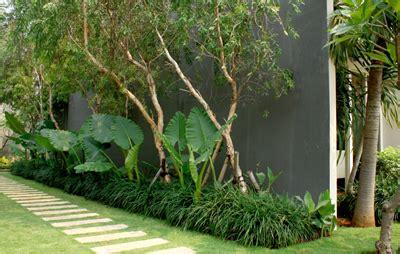 reiki feng shui tanaman hias  rumah tinggal