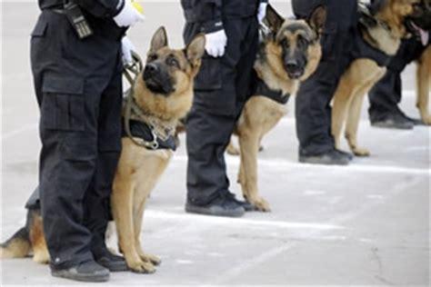 como hacerse  adiestrador de perro policia