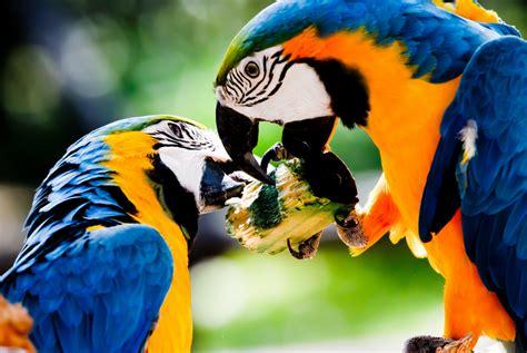 Nah, disini anda bisa melihat langsung gambar burung yang populer di sosial. 15 Koleksi Gambar Burung Kakak Tua yang Paling Unik Dan Langka | Burung Kakak Tua | Jambul Kuning