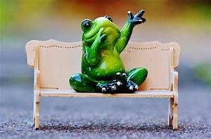 Frosch Bilder Lustig : kostenloses foto frosch sitzbank entspannung ruhe kostenloses bild auf pixabay 1079994 ~ Whattoseeinmadrid.com Haus und Dekorationen