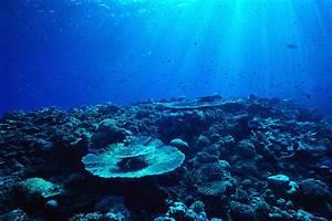 Caribbean Underwater World Luxury Yacht Charter