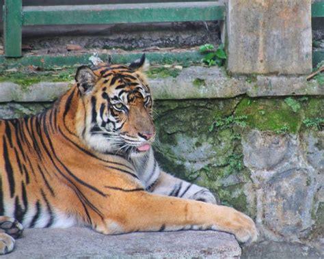 panduan lengkap wisata kebun binatang gembira loka yogyakarta