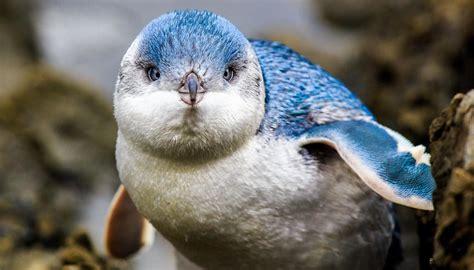 DOC scolds Napier Instagram users for treating little blue ...
