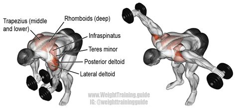rear pec deckbent lateral raises bent lateral raise an isolation exercise target