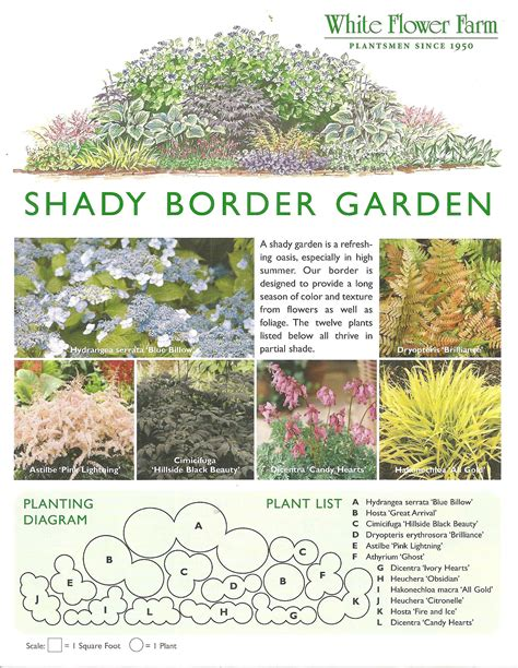 shady border garden plan from white flower farm border