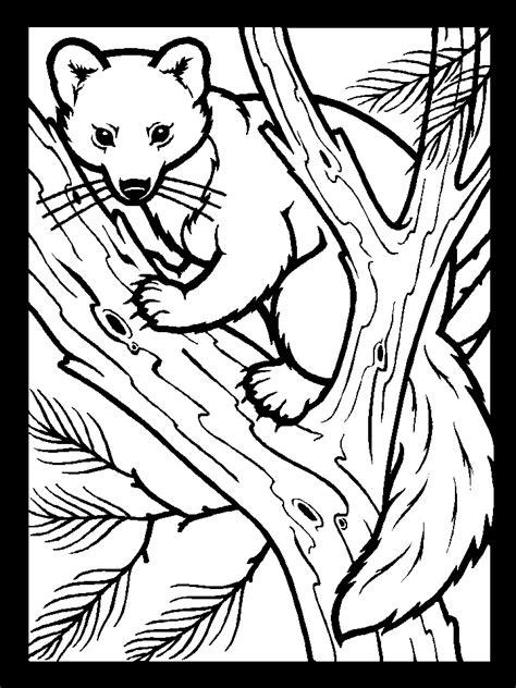 printable color pinemartin animals coloring pages coloringpagebookcom