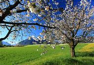 Beautiful Spring Landscapes