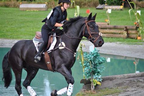 horse english quarter american riding jumping