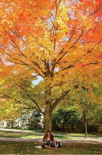 Colorado Trees Tree Campus Every Season Boulder