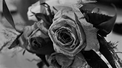 Rose Roses Ultra Wallpapers Bouquet Dark Memories
