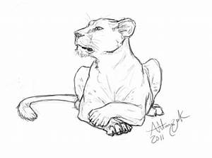 Attentive Lioness by Marcynuk on DeviantArt