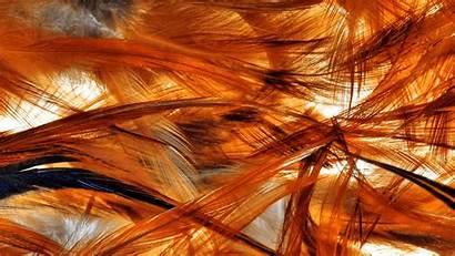 Phoenix Bird Feathers Wallpapers Pixelstalk Fire Wallpaperplay