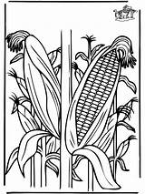 Coloring Corn Crop Plants Funnycoloring Clipart Template Ohio Advertisement Library sketch template