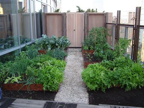 rooftop vegetable gardens rooftop vegetable gardens www imgkid com the image kid has it
