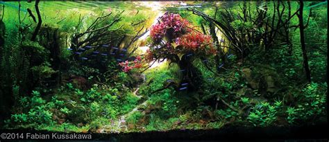 Precision Aquascapes - the flamboyant by fabian kussakawa colour and cheerful