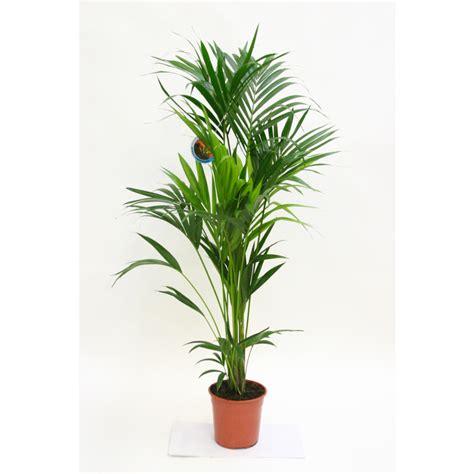 plantes artificielles botanic