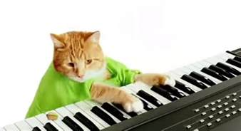 keyboard cat memes make mega money business insider