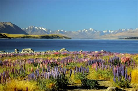 Lake Tekapo Top 8 Spots For Photography