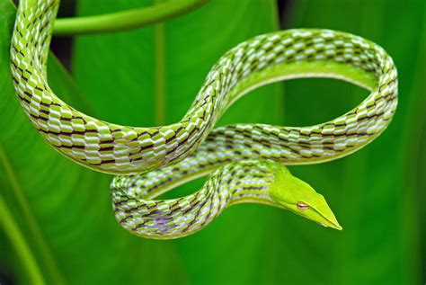 Snake Breeds 9 Gorgeous Snake Species From Around The World Mnn
