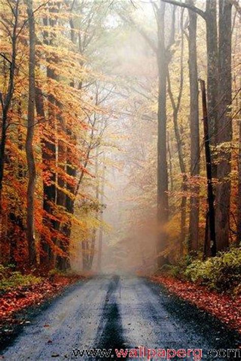 Fall Backgrounds Realistic by Realistic Picture 3d Hd Nature Wallpapers For