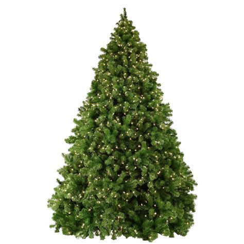 sequoia fir prelit tree christmas lights