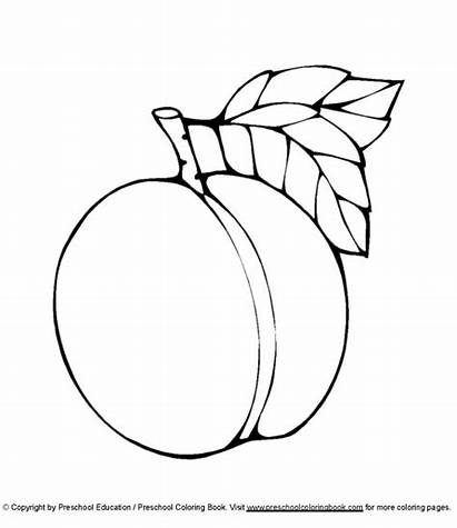 Peach Coloring Colouring Pages Tree Printable Drawing