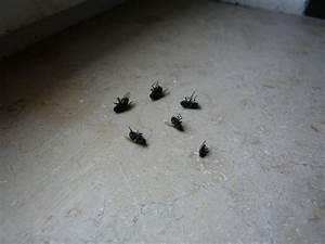Fliegen Im Fensterrahmen : mopsis baublog exterminator ~ Buech-reservation.com Haus und Dekorationen