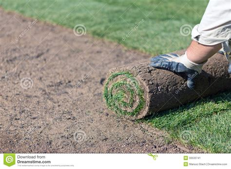putting in a new lawn installing new lawn stock image image 33533741